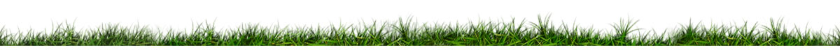 Grass_slider_3